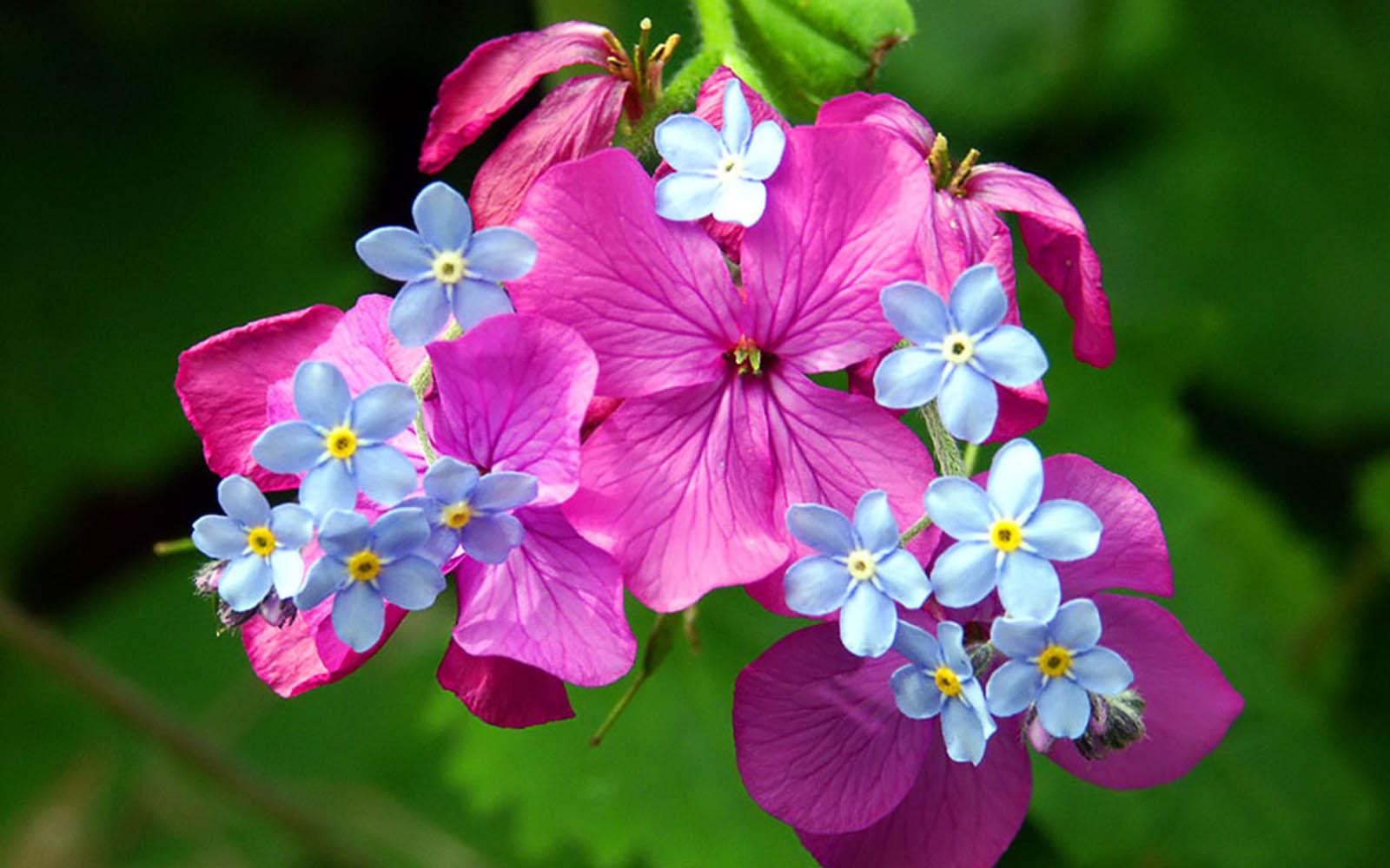 Beautiful Colorful 3d Hd Flowers Wallpaper For Desktop ...