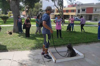 Entrenador de perros en Lima