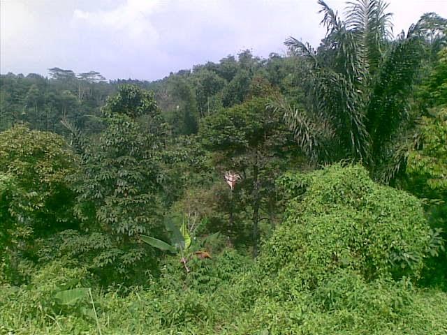Foto(5080) Jual Tanah | Tanah Di jual, luas 4,25 ha kebun jual tanah di puncak