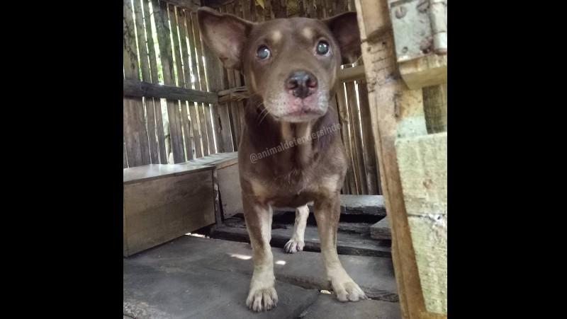 Anjing yang dikira babi ngepet di Tangerang