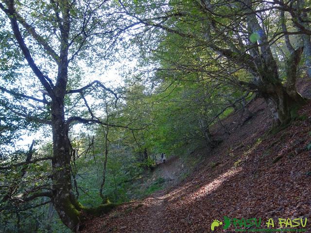 Ruta Vega Pociellu y Bosque Fabucao: Entrando en el bosque de fabucao