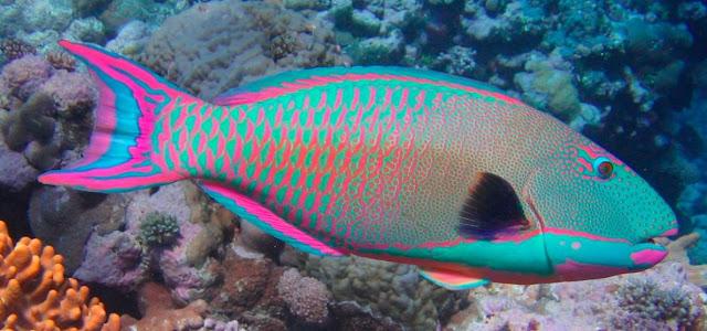 Los peces y su flotabilidad