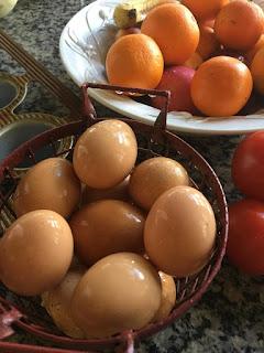 homestead chicken eggs