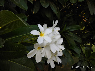 flower_india_get_picsy