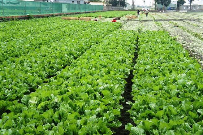 中時新聞-雲林縣2015年農業產值729億 重返全國龍頭