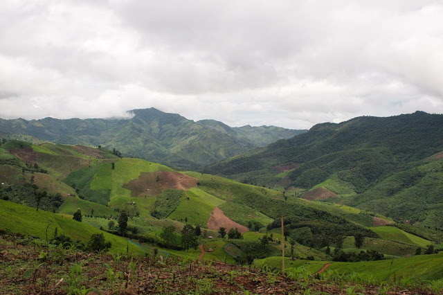 Southeast Asian forest loss greater than expected, with negative climate implications