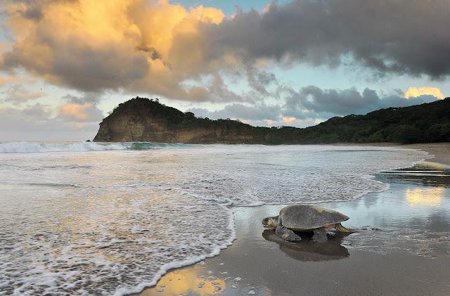 turtles nicaragua