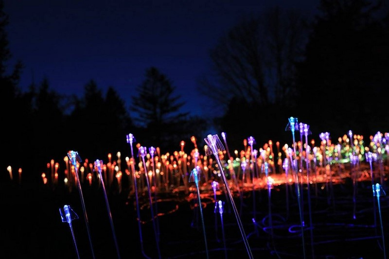 Winter Light at the  Minnesota Landscape Arboretum - Bruce Munro