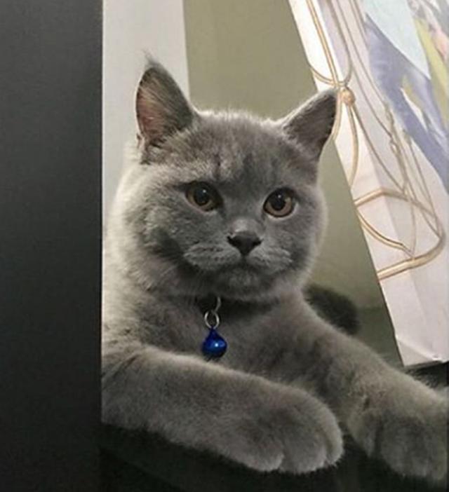 Kisah Kucing Rita Rudaini, Pekan Hilang. Alhamdulillah Dah Jumpa...