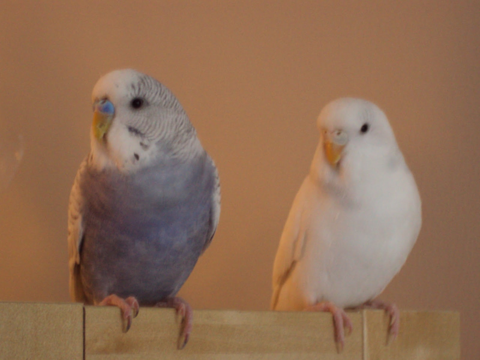 Budgies are Awesome: November 2011