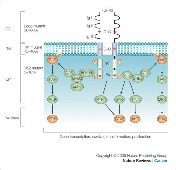 Natural History Of Achondroplasia