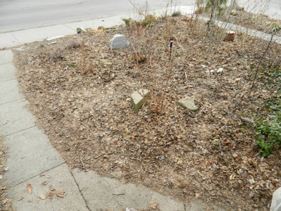 A Riverdale Front Yard Spring Cleanup Before by Paul Jung Gardening Services--a Toronto Organic Gardening Company