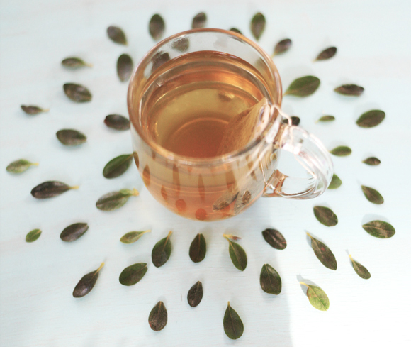 DIY: Cách làm xịt khoáng trà xanh siêu đơn giản