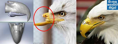 Injured Bald Eagle Gets New 3-D Printed Beak - Watch Video