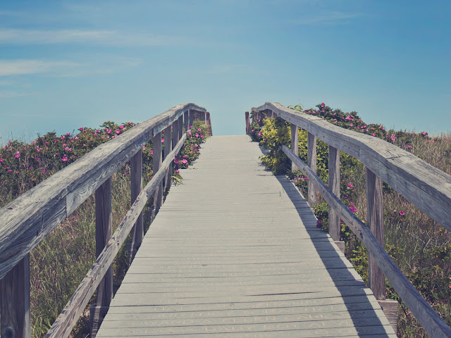 beach boardwalk surrounded by flowers