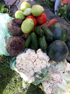travel, romania, autumn, 4seasons, pickles, romanian autumn, winter, winter stock, harvest crops,