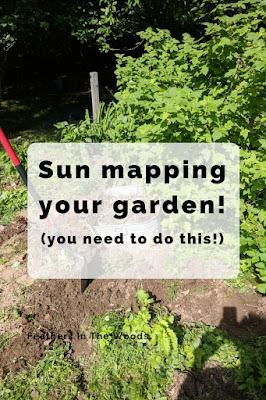 Sun mapping the garden