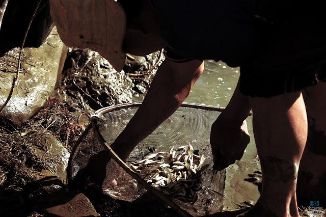 nagaland-photos-fishing-fishery-longsa-village-life