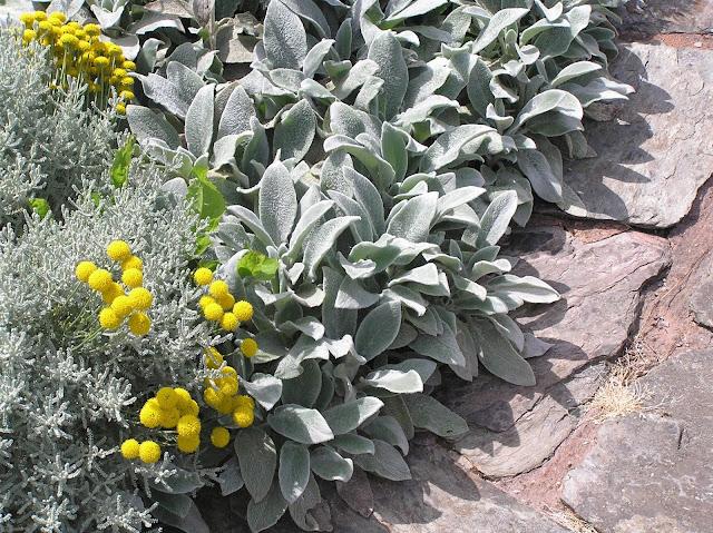 kompozycja bylinowa szaro-żółta