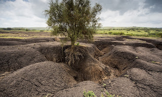 Soil erosion in Tanzania. Fertile soil is being lost around the world at a rate of 24bn tonnes a year. (Photograph Credit: Carey Marks/Plymouth University) Click to Enlarge.