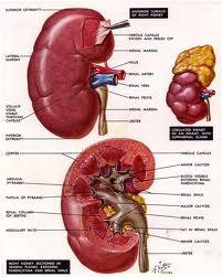 Cara menyembuhkan infeksi ginjal