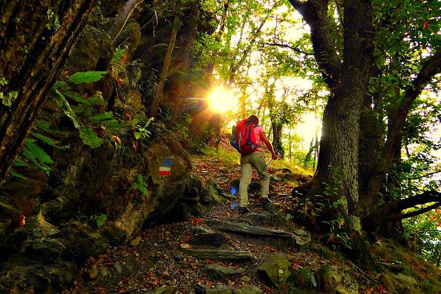 CAMOSCI BIANCHI Blog di montagna