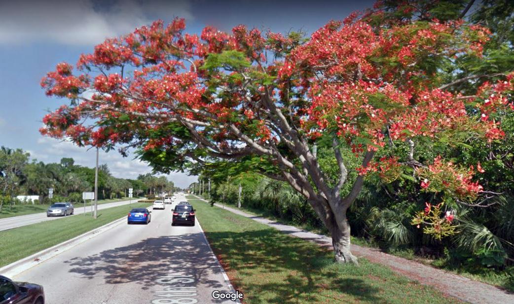 Roadside tree in bloom.