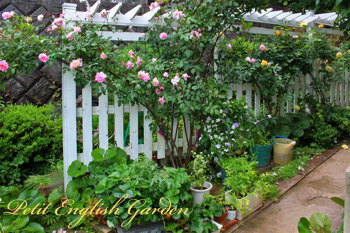 Country Yellow Picket Fence Apple Tree Blue Flower Vine Arbor Wallpaper Border