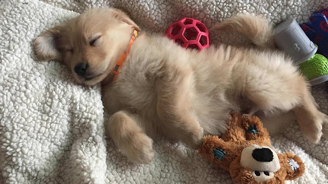 National Puppy Day Images