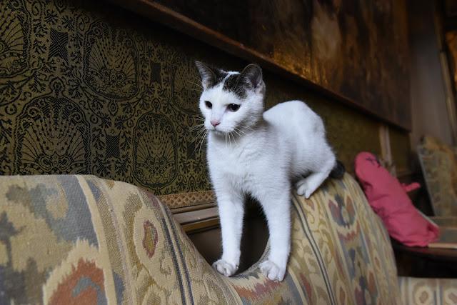 cat, clicker training, cat training