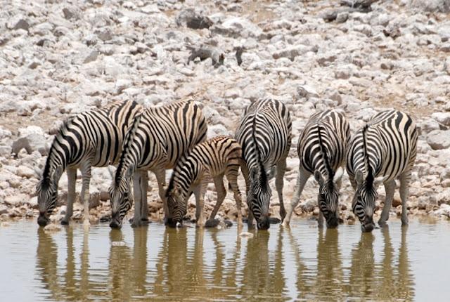 UNDER AFRICAN SKIES: MET DE 4X4 DOOR NAMIBIË (2) SWAKOPMUND - ETOSHA