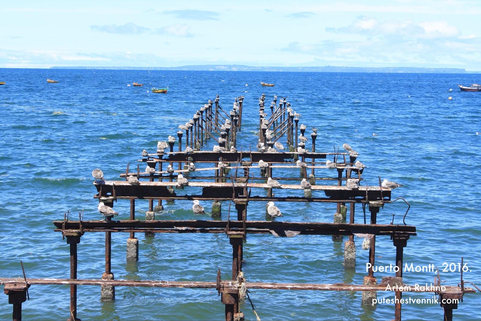 Чайки в Пуэрто-Монт