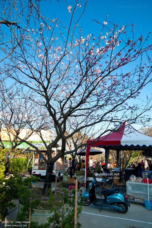 櫻花樹 員農種苗芬園花卉生產休憩園區 櫻花