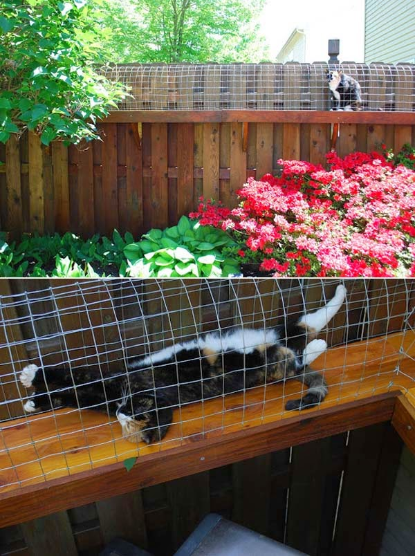 19.) Help your indoor kitty get some sun by building a walkway. - These 29 Do-It-Yourself Backyard Ideas For Summer Are Totally Awesome. Definitely Doing #10!