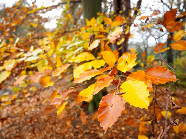Autumn leaves on Corstorphine Hill, Edinburgh, Scotland
