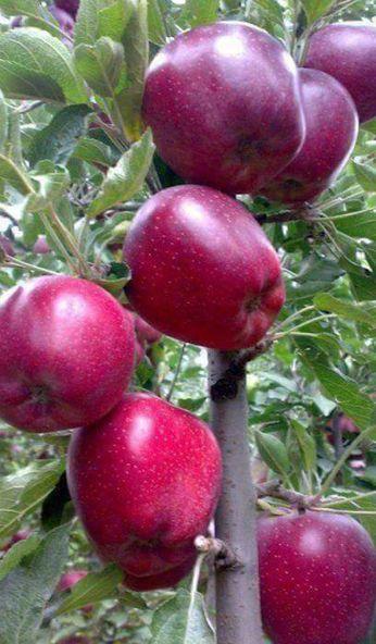 Frutas | Botânica