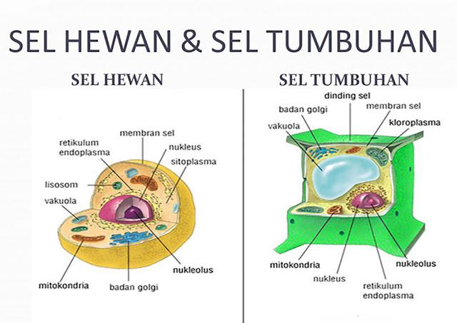 gambar sel hewan dan sel tumbuhan beserta keterangannya