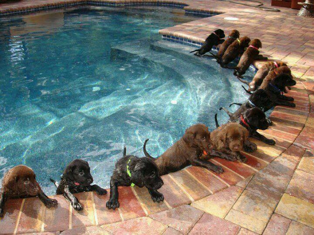 Swimming - dogs fun time
