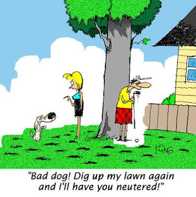 Bad dog! Dig up my lawn again and I'll have you neutered