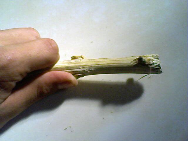 cañamo, cannabis, planta, hilos, cepillado, técnicas, manualidades