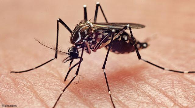 Tau Gak Sih?, Ternyata Nyamuk Suka Gigit Berdasarkan Golongan Darah Lho