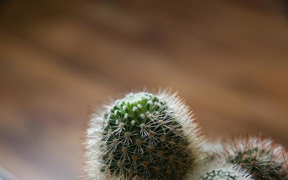 Kaktus download besplatne pozadine za desktop 2560x1600