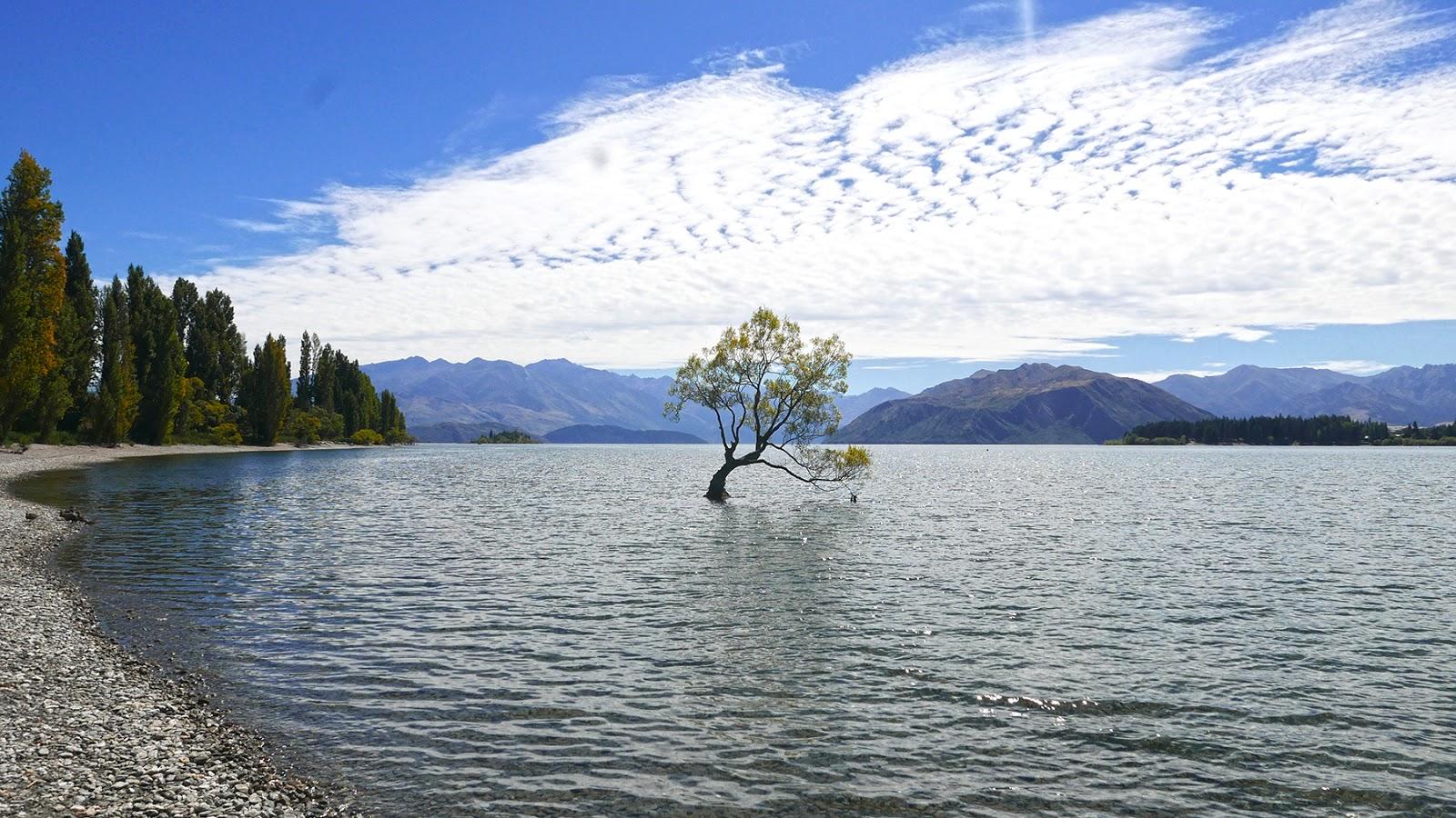 Euriental | luxury travel & style | Wanaka tree, New Zealand