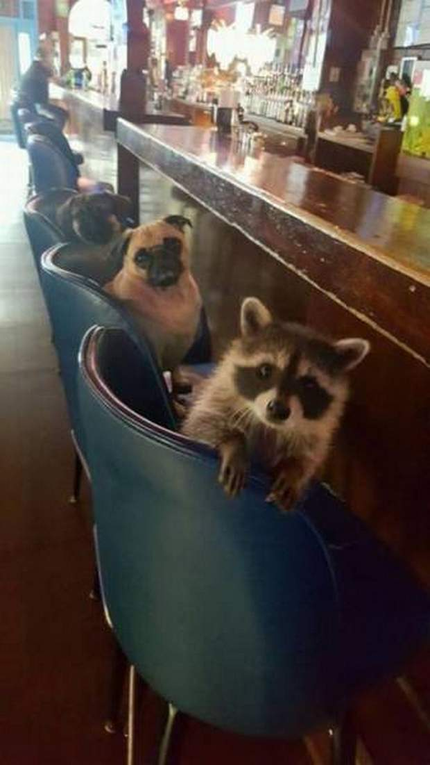 Funny animals of the week - 30 September 2016, best funny animal photos, cute animal pics