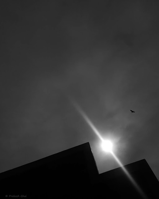 A Black and White Minimalist Photograph of a Bird at Jawahar Kala Kendra shot via Samsung S6 Smartphone Camera