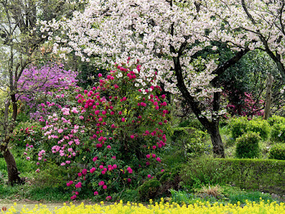 Spring garden: Ofuna botanical garden (Kamakura)