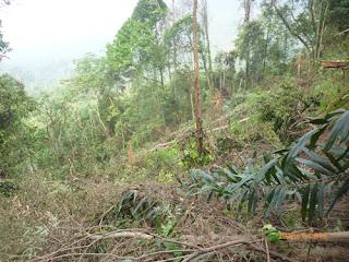 Perambahan hutan lindung Tormatutung