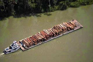 Resultado de imagem para contrabando de madeira na Amazônia