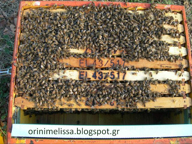 Τα μελίσσια βάζουν μέλι. Τέτοια μελίσσια θέλουμε για το Χειμώνα. Η έγκαιρη αντικατάσταση της μάνας.  Γράφει ο Πάνος απο το Βόλο...