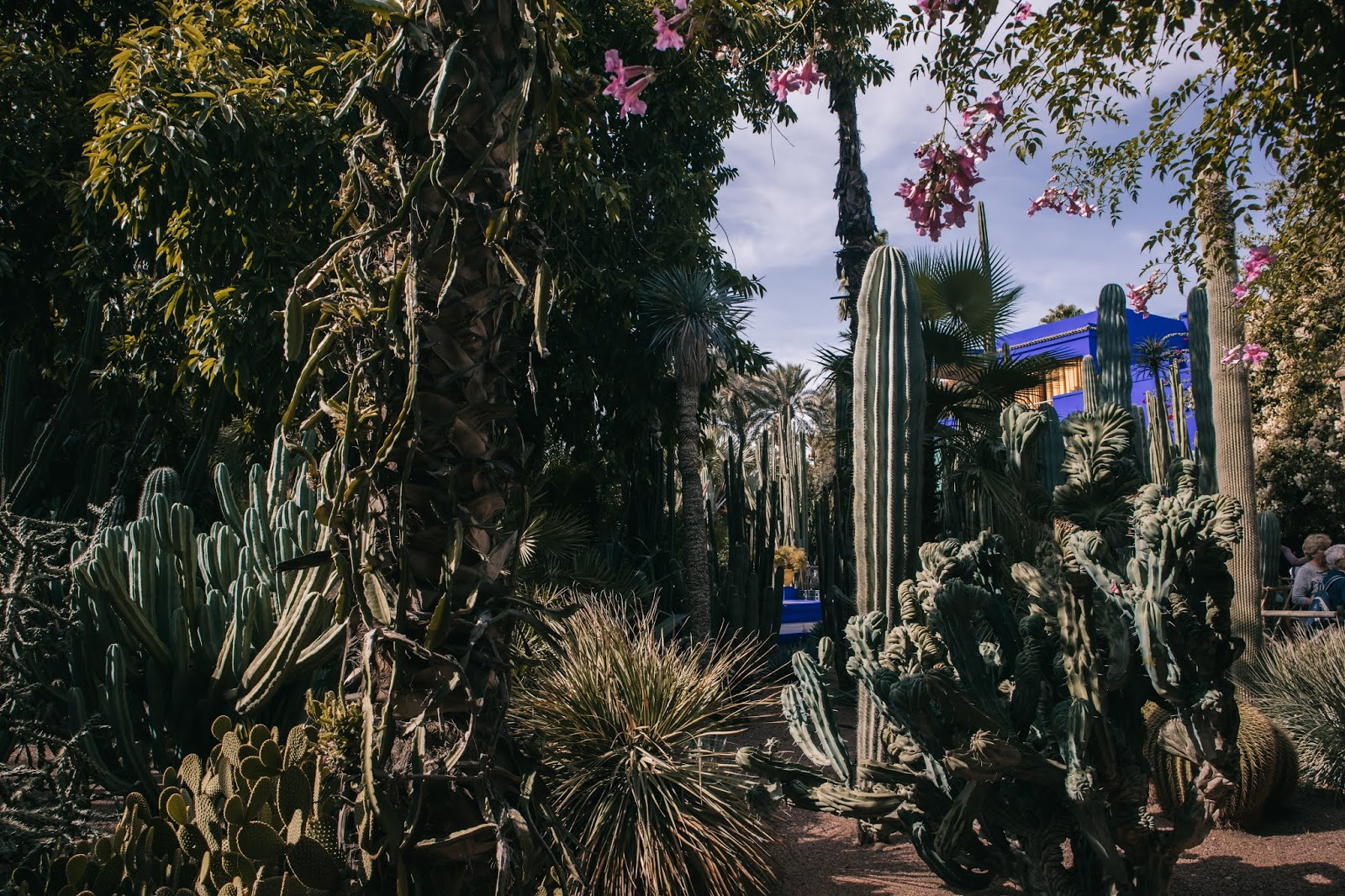 impressions of Marrakesh, Marrakech November 2018, Marrakesh November, Marrakesh travel, Suz and the Sun Travels, Suz & the Sun, Jardin Majorelle, Majorelle Blue, Yves Saint Laurent Museum